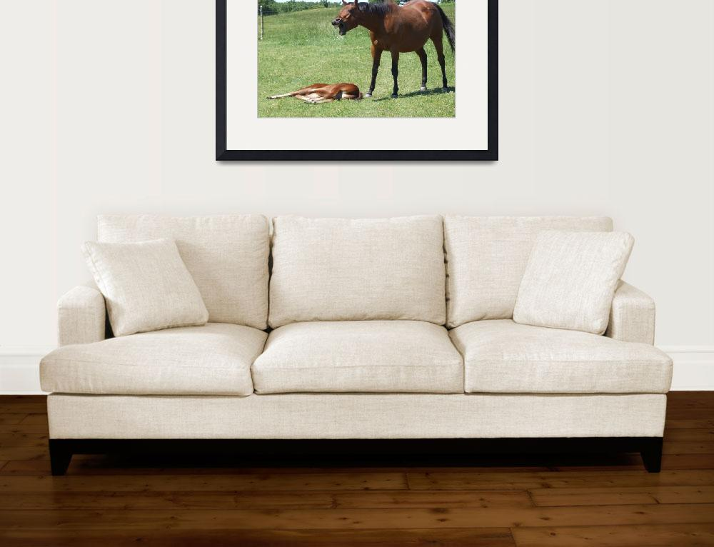 """""""Horse talk&quot  (2009) by Hartphotography"""