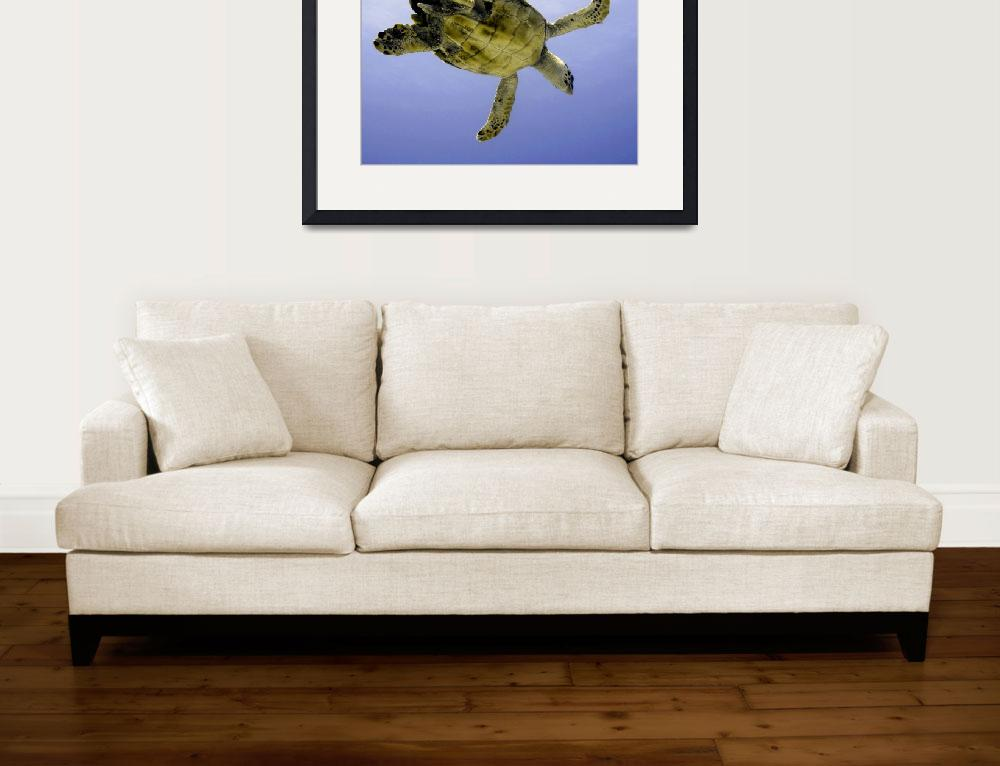 """""""2014 GC - Turtle Flying&quot  (2014) by scubagirlamy"""