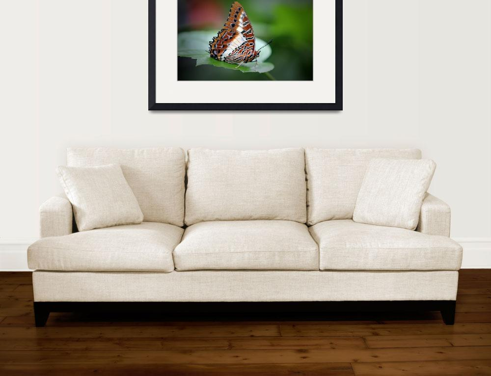 """""""White-barred Chartaxes Butterfly 2017&quot  (2017) by KsWorldArt"""
