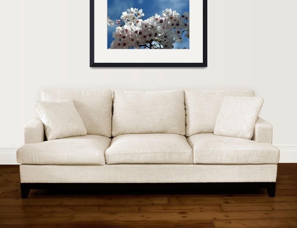 """""""Cherry Blossom Sky&quot  (2008) by LorrieMorrison"""