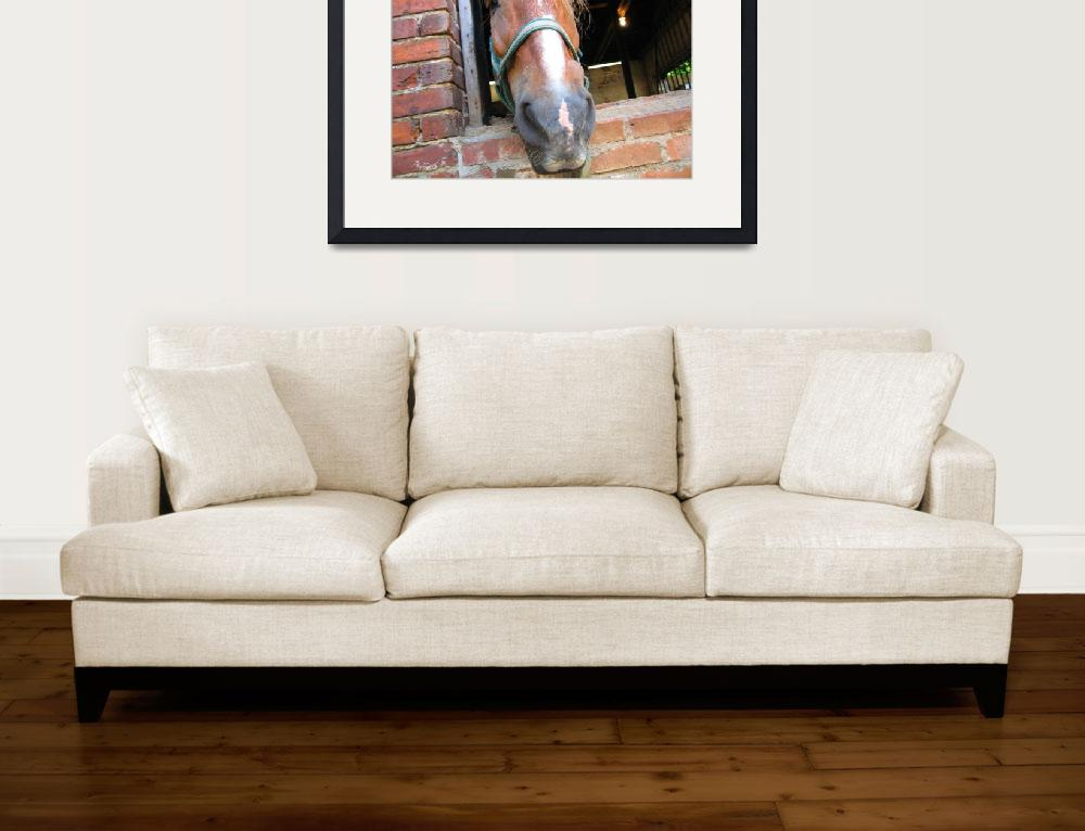 """""""Carriage Tour Horse""""  (2012) by kenrainwaterphotography"""