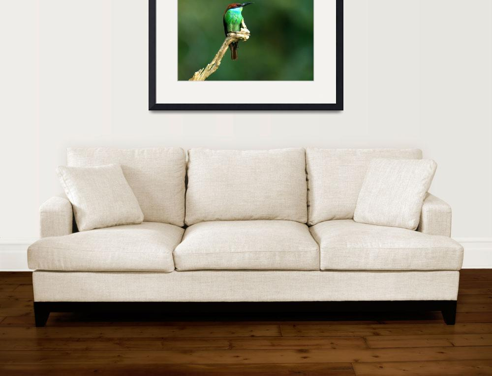 """""""The perch""""  (2008) by eyecapture"""