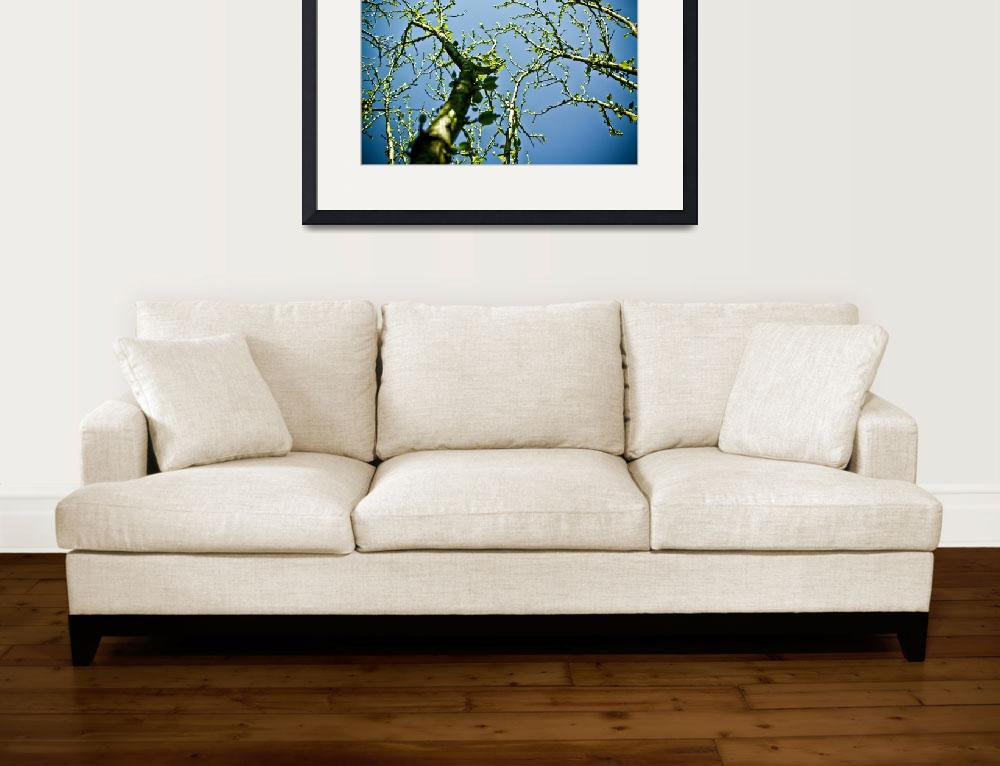 """""""SPRING TIME LEAVES ON GROWING BRANCHES REVISITED""""  (2010) by photographybyryankelly"""