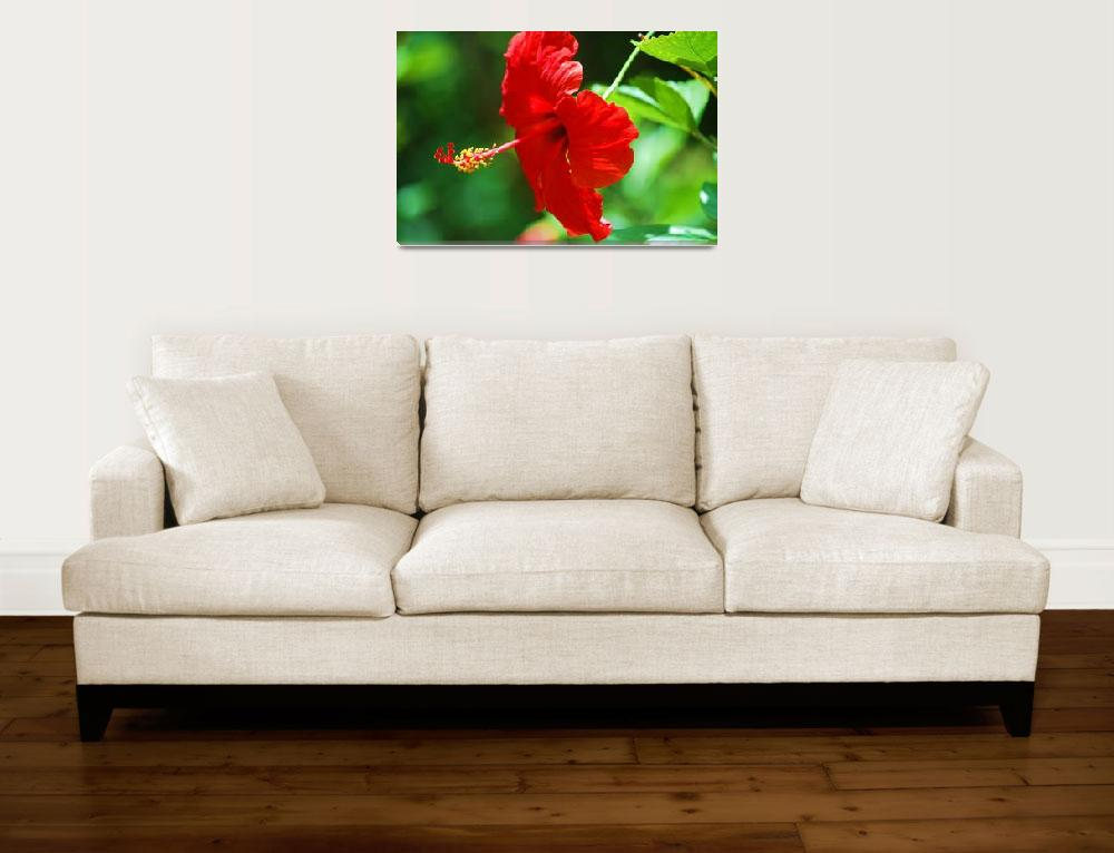 """""""Red Hot Hibiscus""""  by DVMPat"""