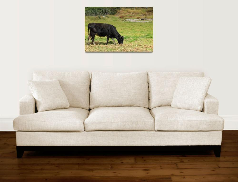 """""""Black Cow Grazing in a Pasture&quot  (2015) by rhamm"""