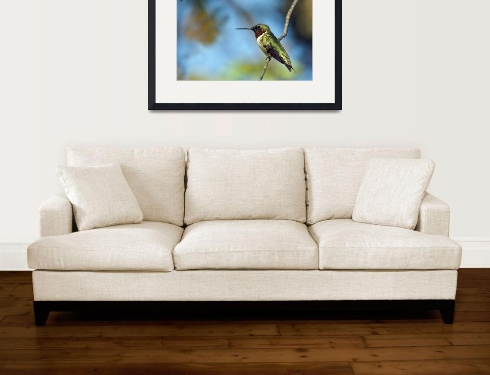 """""""Ruby-Throated Hummingbird on a limb""""  (2007) by tricia"""