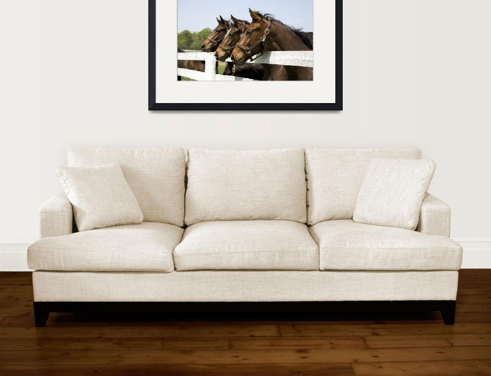 """""""Horses""""  (2010) by lillisphotography"""