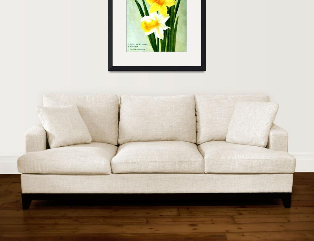 """""""Daffodil Flower Advertisement 1913&quot  (2013) by TheNorthernTerritory"""
