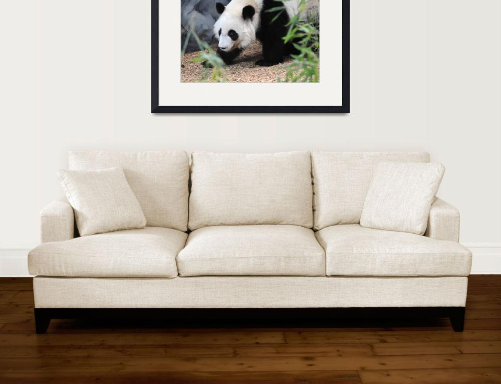 """""""Young Panda&quot  (2008) by KatRosePhotography"""
