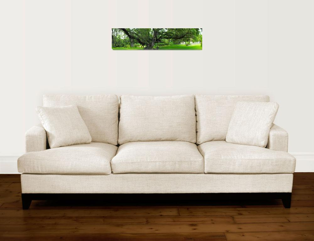 """""""Confederate Oak Panorama""""  (2008) by ChrisCrowley"""