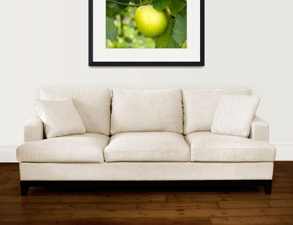 """""""Green Apple on a Tree Branch""""  (2011) by ValeriesGallery"""
