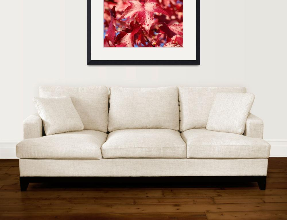 """Dew Drops Red Autumn Leaves Fall Trees art prints&quot  (2013) by BasleeTroutman"