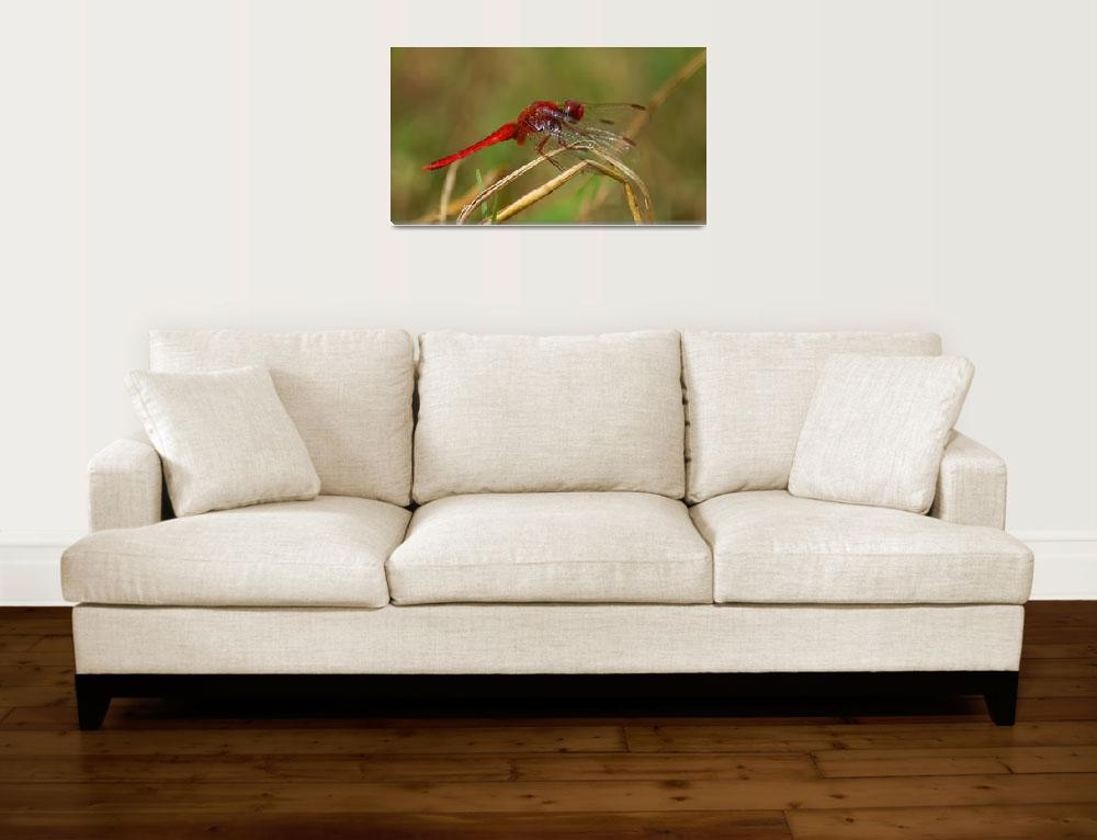 """""""African Red Dragonfly""""  (2010) by Andrea_Donaldson"""