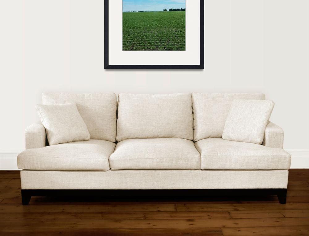 """""""Indiana Farm Field&quot  (2017) by RealLongJourney"""