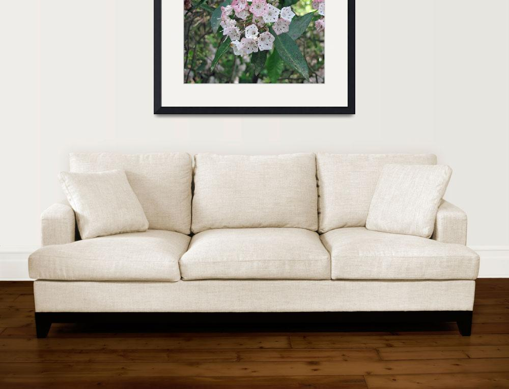 """""""Mountain Laurel&quot  (2009) by PhotosbyNeal"""