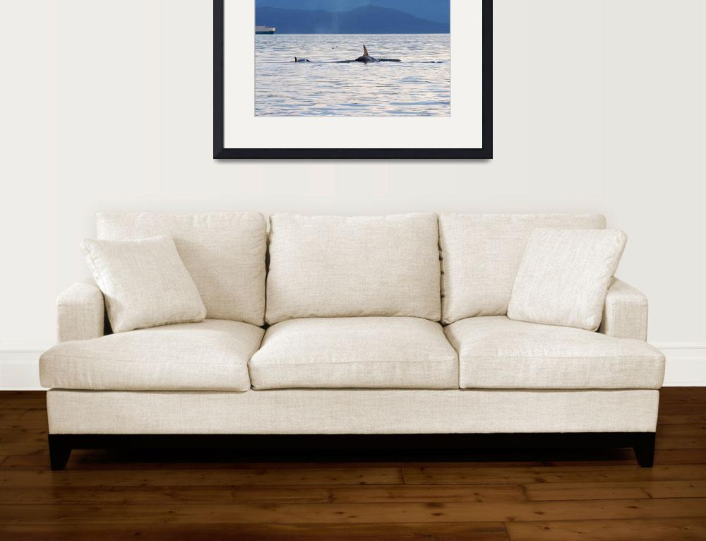 """""""Orca Whale (8656)""""  (2008) by neilnathan"""