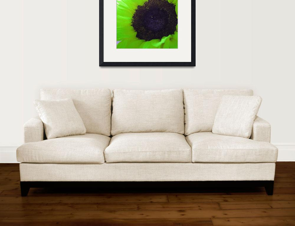 """Green Sunflower&quot  (2011) by Rachelheath"