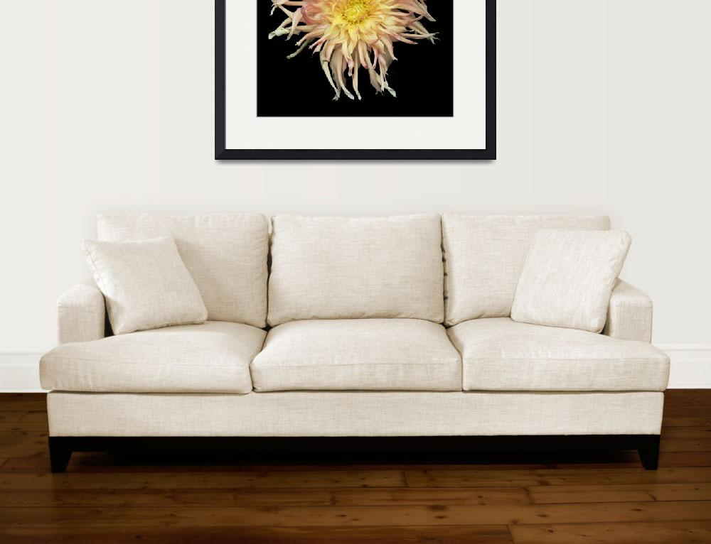 """""""Shaggy Yellow and Pink Dahlia&quot  (2010) by RussMartinPhotography"""