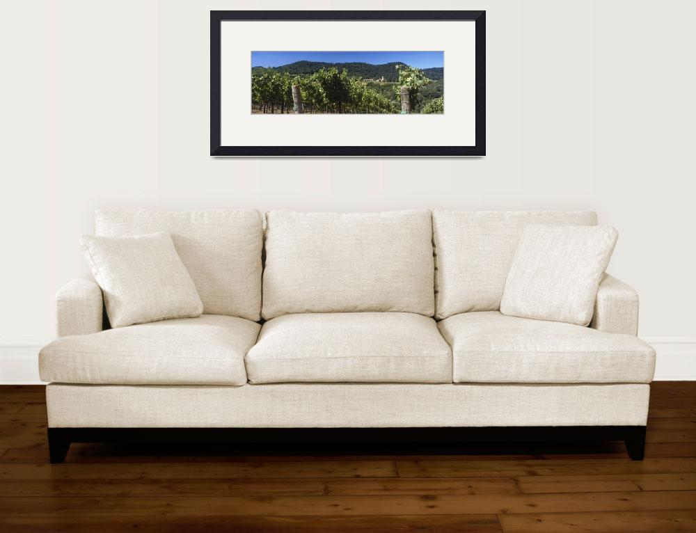 """""""Christian Brothers Hess Collection Vineyard Napa&quot  by Panoramic_Images"""