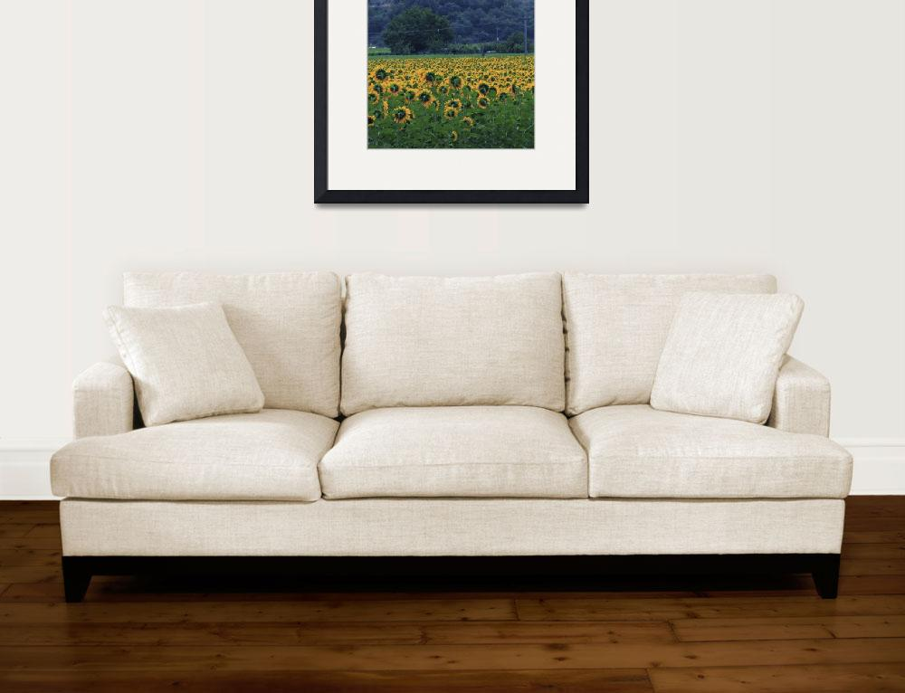 """""""Sunflowers from the back&quot  (2011) by manuelmazzei"""