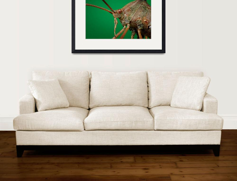 """""""Eichelberger Art Collection Framed Print""""  by buddakats1"""