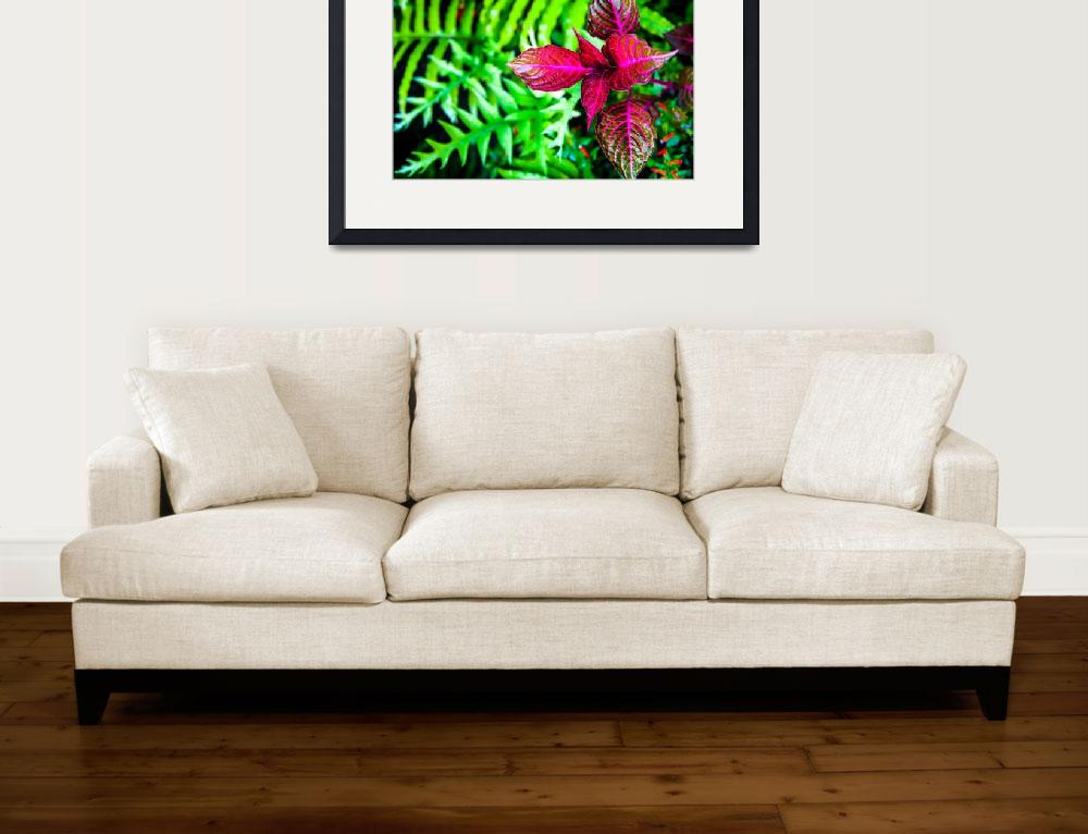 """""""Fern and Coleus&quot  (2015) by DonnaCorless"""