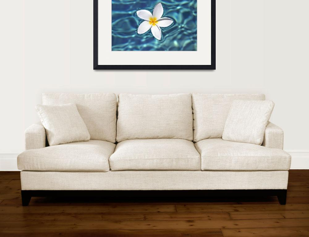 """Plumeria Flower Floating In Clear Blue Water&quot  by DesignPics"