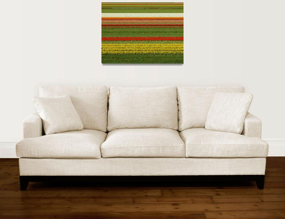 """""""Tulip Field - Straight tulip lines in tulip field&quot  (2009) by vision"""