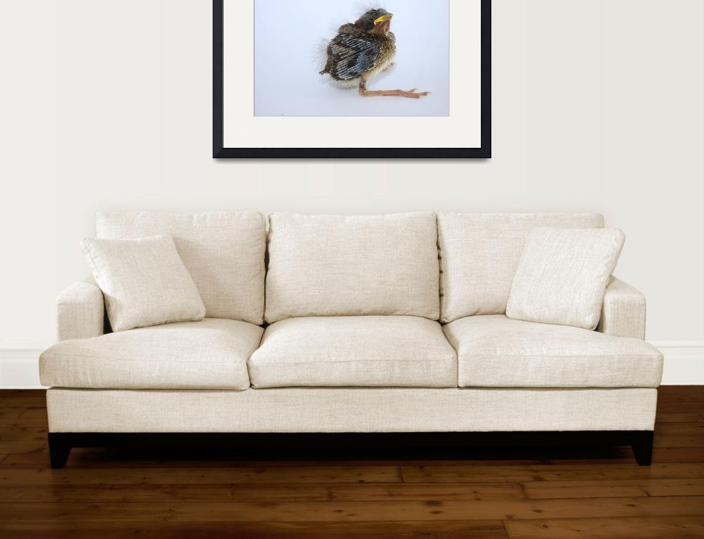 """""""Sparrow Chick""""  (2016) by rhamm"""