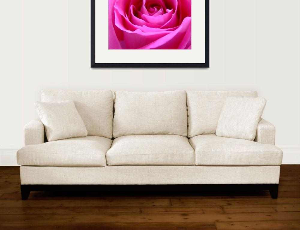 """Pink Rose&quot  (2009) by Hartphotography"