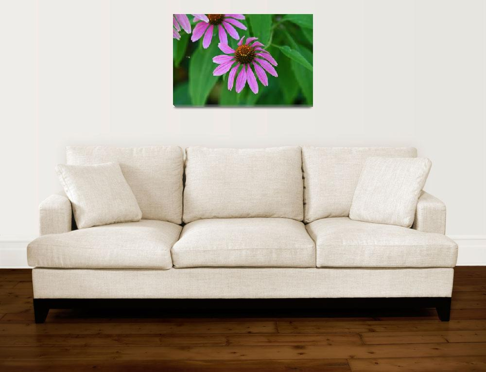 """Purple Coneflower  Echinecea&quot  (2012) by KsWorldArt"
