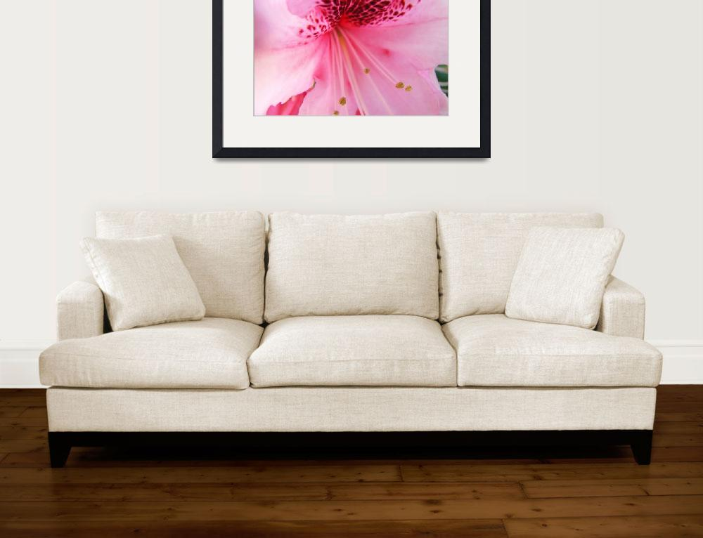 """""""Christmas Gift Gallery PINK RHODODENDRON Art""""  (2009) by BasleeTroutman"""