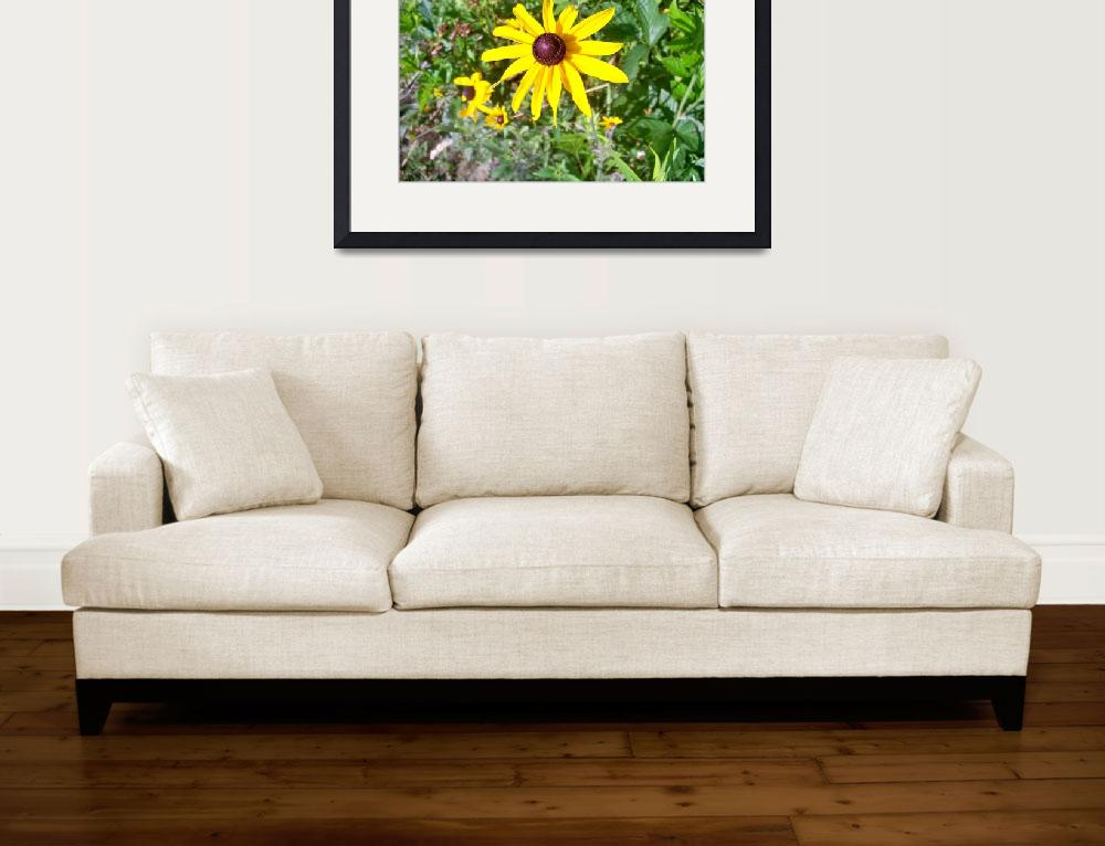 """""""Blackeyed Susan in the field&quot  (2009) by PJCRAYTON"""