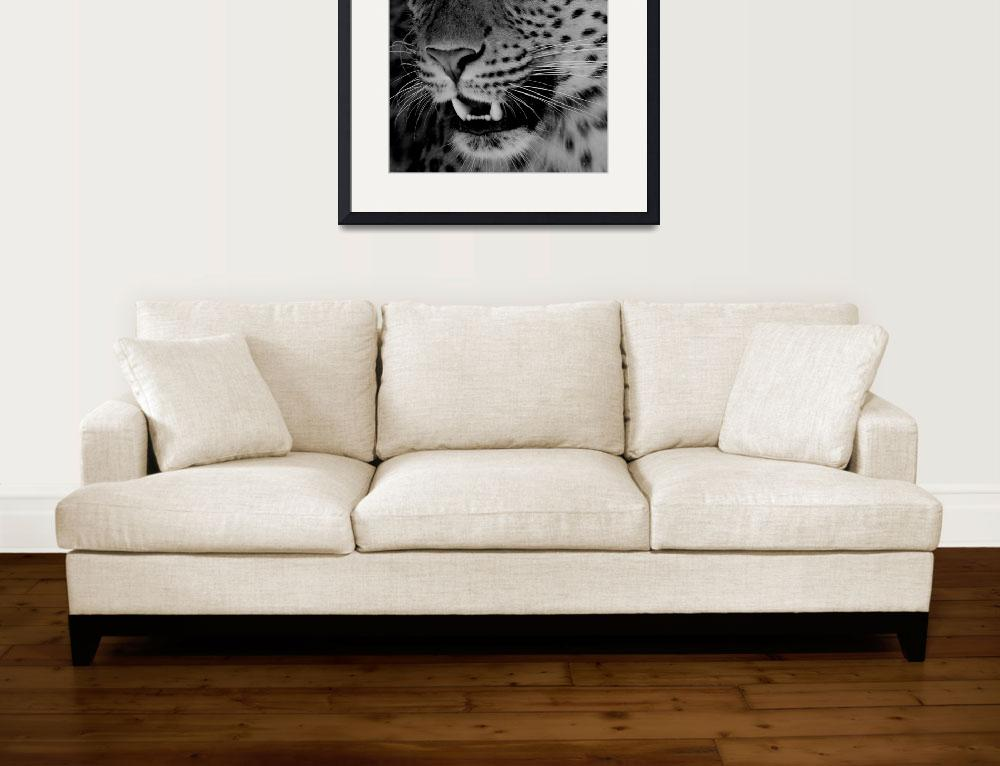 """""""Big Cat B&W&quot  (2009) by louisefahy"""