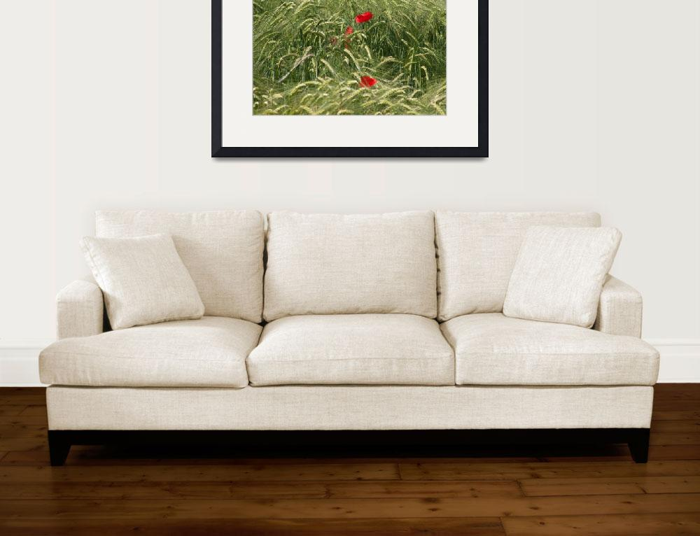 """""""poppies in wheat field&quot  (2012) by brunopaolobenedetti"""