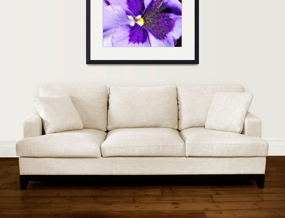 """""""pansy face&quot  by Jewelymosier"""