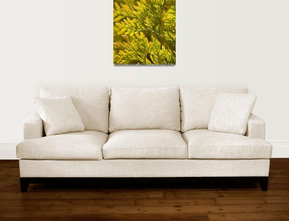 """Yellow cyprus pine""  (2009) by AlluringDigital"