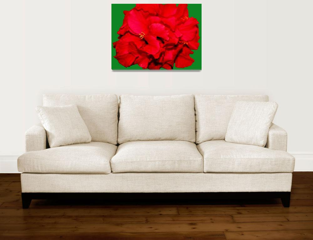 """""""Christmas Hibiscus&quot  (2008) by rayjacque"""