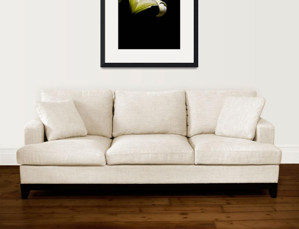 """""""White Regal Lily Gorgeous&quot  (2006) by Infomages"""