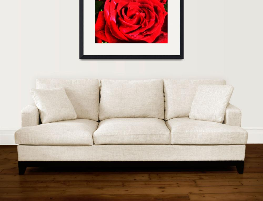 """""""Red rose close up stylized&quot  (2010) by annav"""