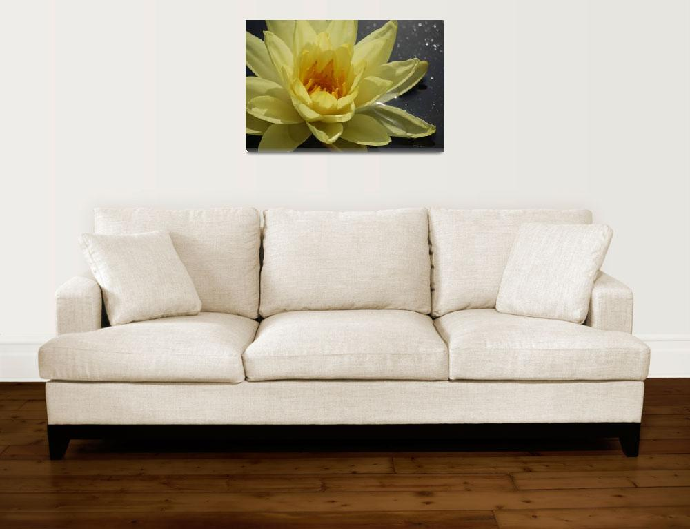 """yellow waterlily""  (2009) by nyc-naturephoto"