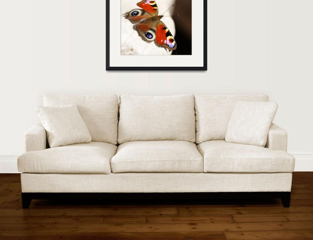 """""""Buterfly (Inachis io)&quot  by fejesb"""