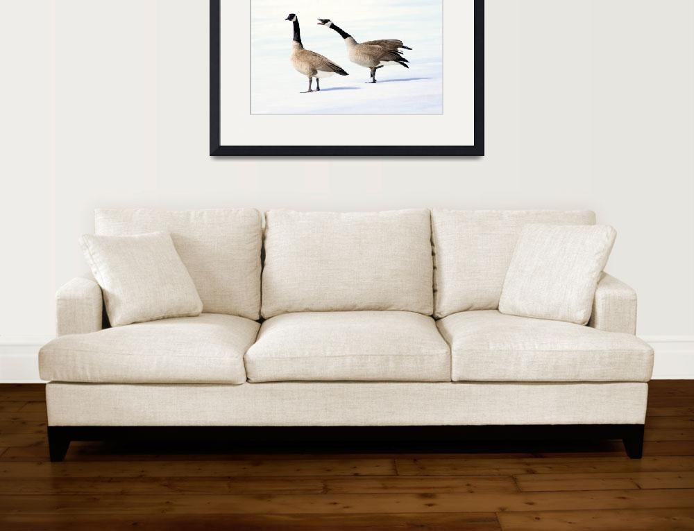 """Canada Goose - In Charge&quot  (2011) by cameragal"