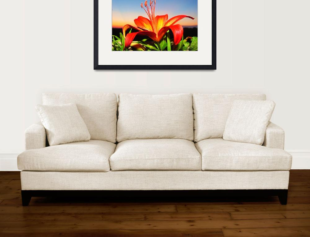 """""""Lilly sunset&quot  (2010) by NaturesImpactPhotography"""