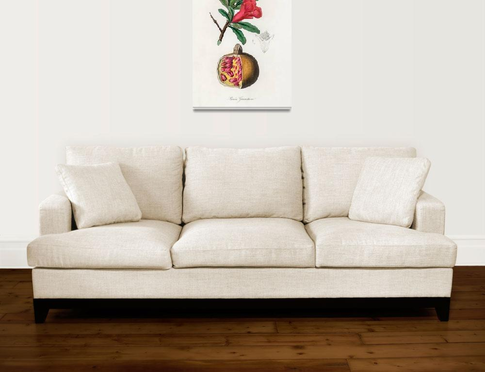 """Vintage Botanical The pomegranate&quot  by FineArtClassics"