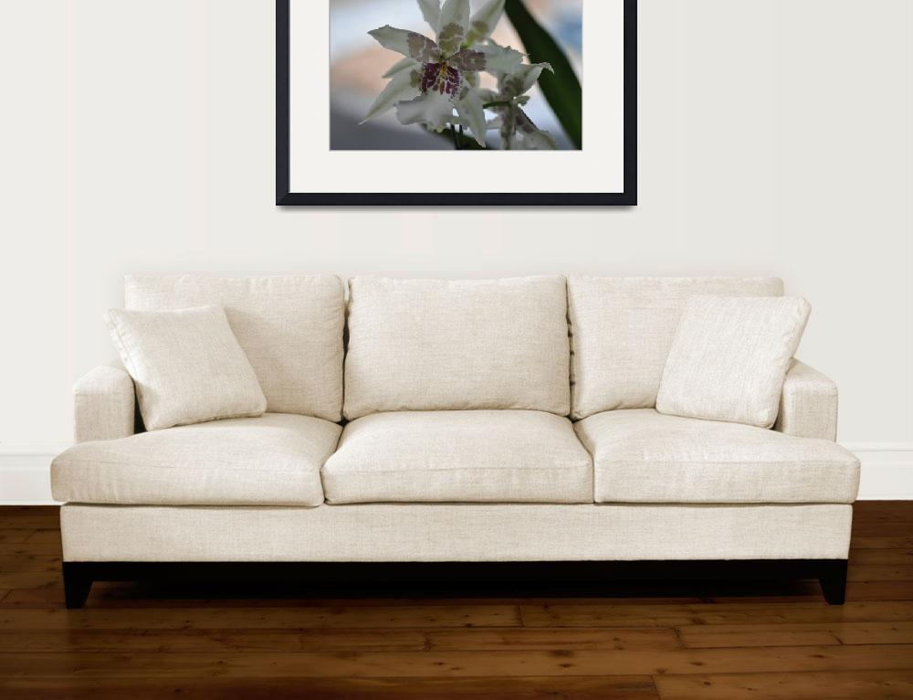 """""""Orchid Sixty Two""""  (2012) by ladycaviar"""