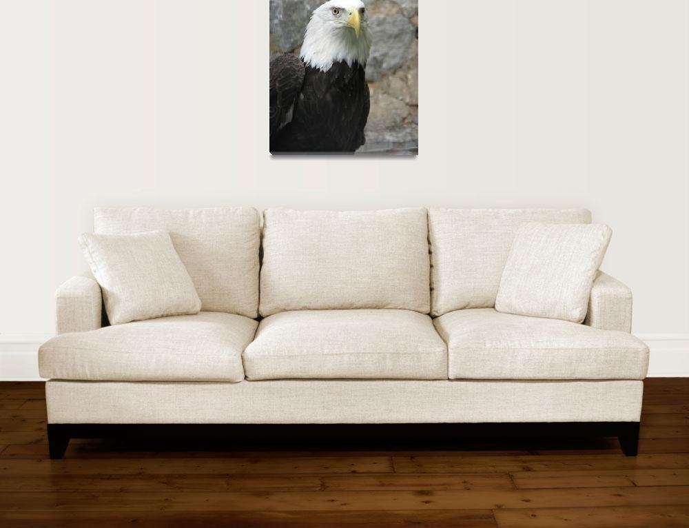 """Eagle eye&quot  (2009) by sghomedeco"