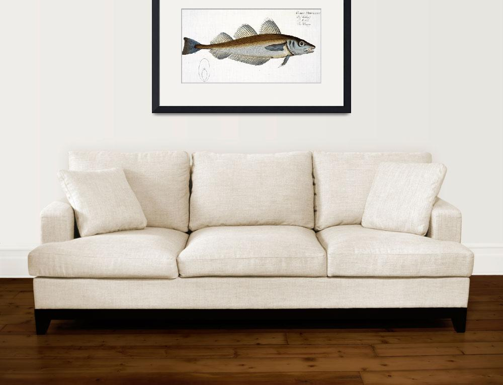 """Whiting (Gadus Merlangus)&quot  by fineartmasters"
