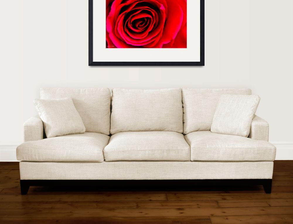 """Red Rose&quot  (2013) by SeanPeck"