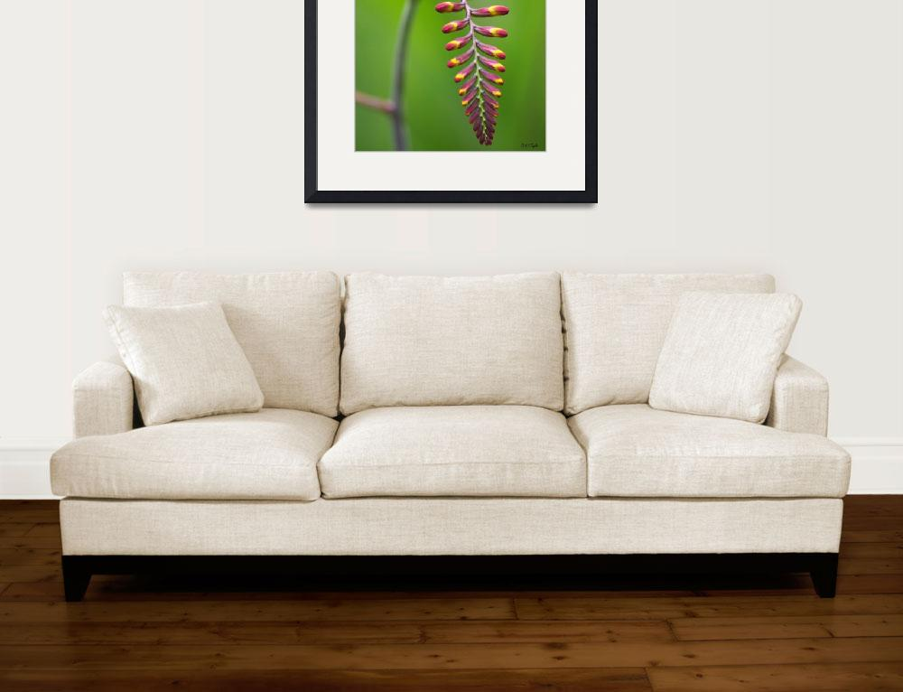 """""""Crocosmia Before the Flare&quot  by aRTPhotograph"""